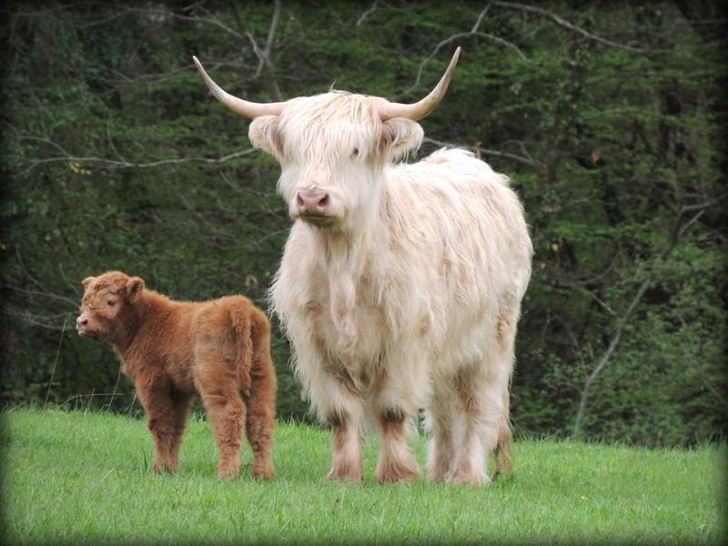 Jonquille et sa mère Frimousse
