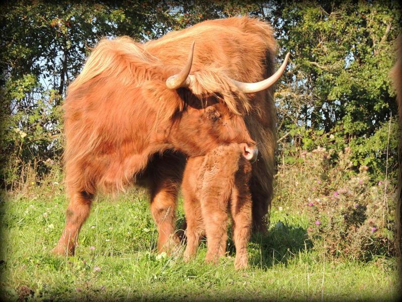 Jolicoeur et sa mère Dona